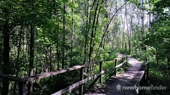 Tilts Bush boardwalk