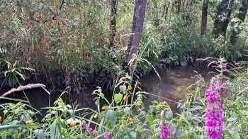 Strasburg Creek